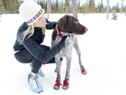 Обувь для крупных собакng