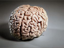 препараты нейропротекторы