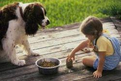 Рацион кормления собак