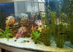 Средства для чистки аквариума