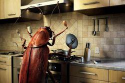 средство от тараканов борная кислота