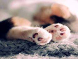 10 самых модных пород кошек
