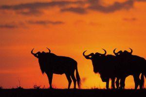 Национальный парк Крюгер