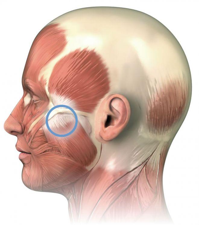 Схема мышц головы