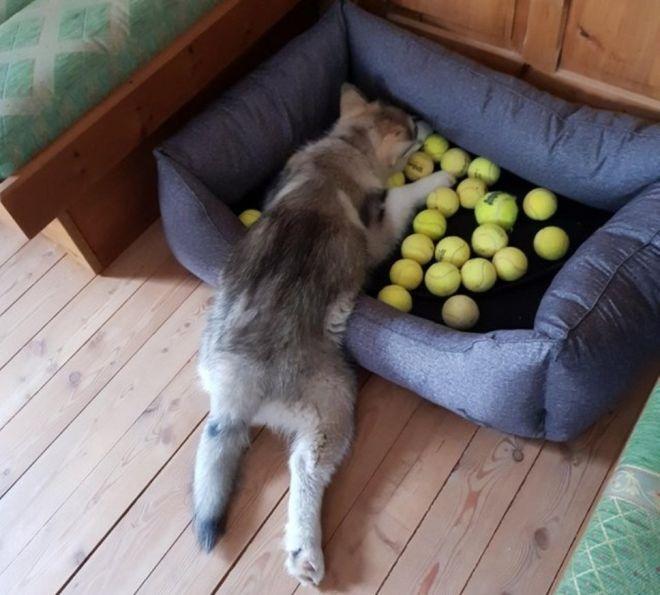 собрал все мячики