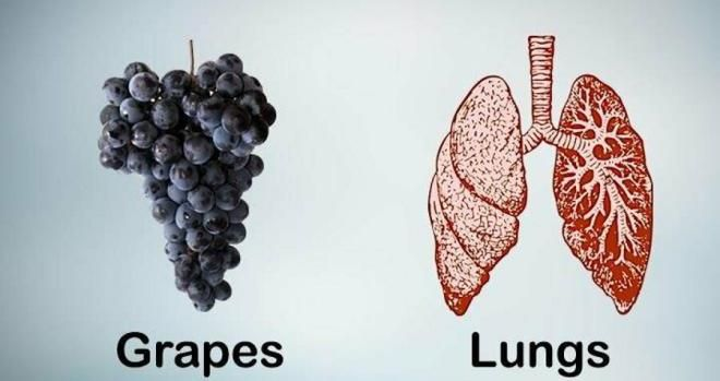 Виноград и легкие