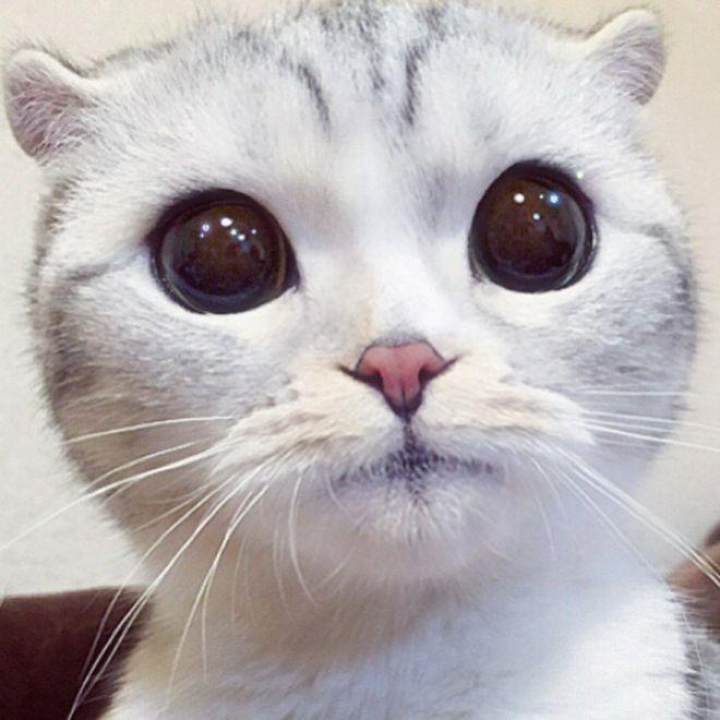 чупа-чупсом картинки котика с большими глазами этого, короткие ногти