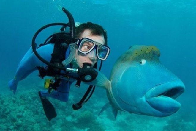 С рыбой