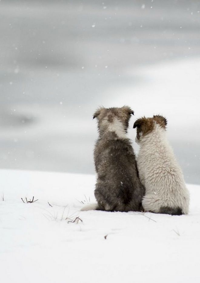 Открытки картинки, картинки зима животные любовь