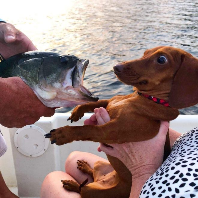 рыбалка – это не моё