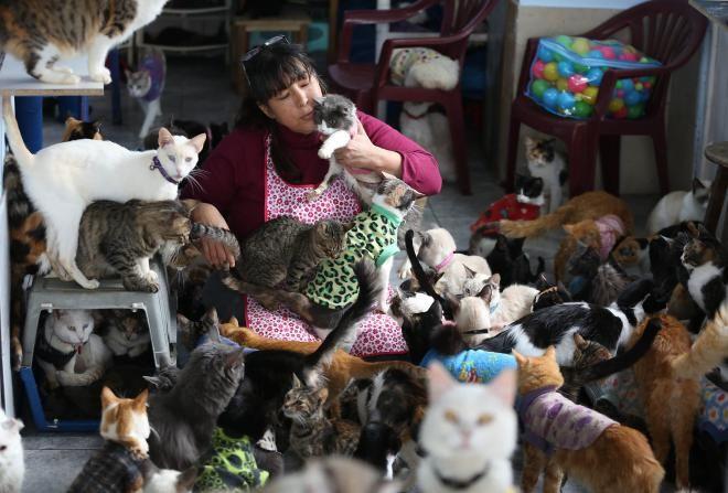 Самое большое количество кошек в одних руках