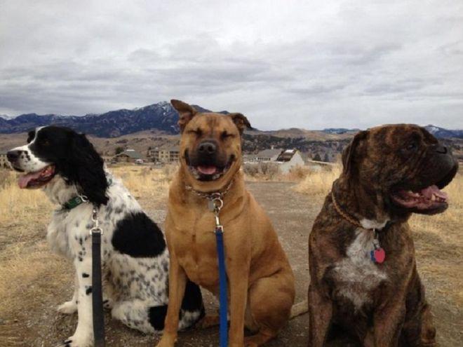 3 собаки