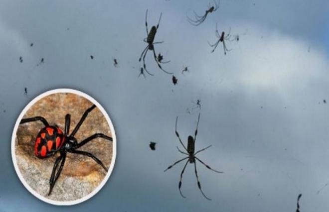 пауки
