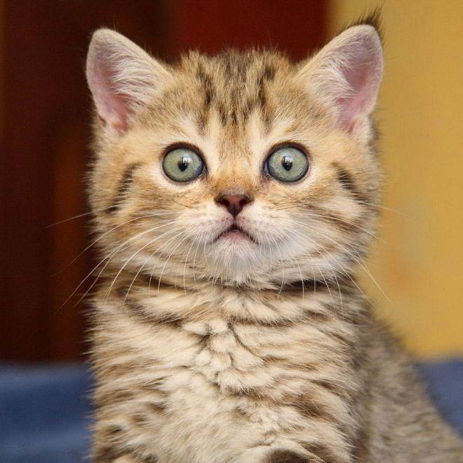 принесли нового котёнка