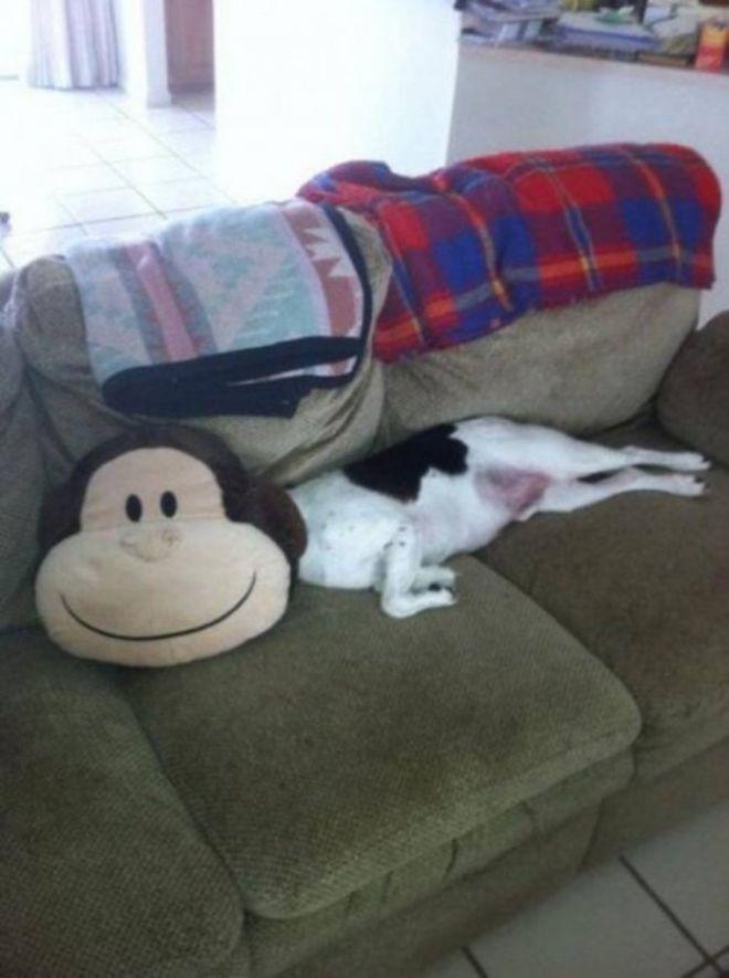 собака-обезьяна