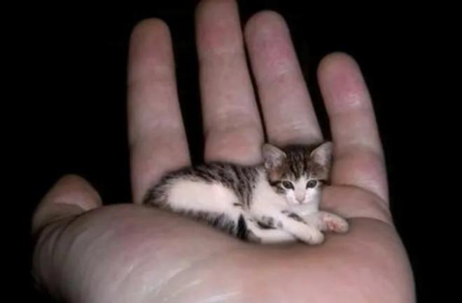Самые маленькие кот и кошка