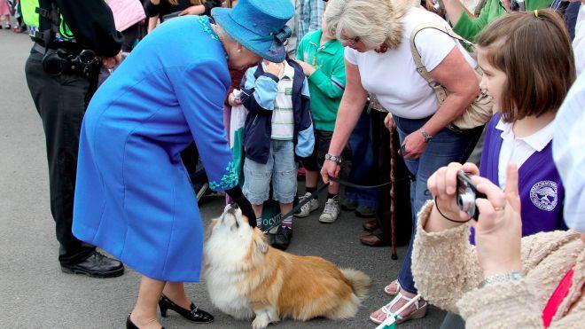 Собаки королевы