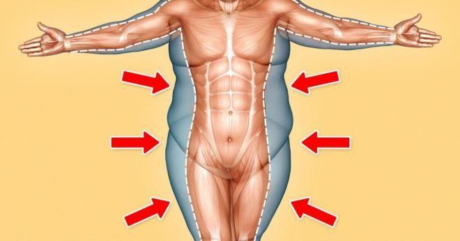 Жир в определенном количестве необходим для здоровья