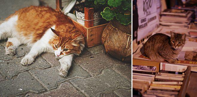 Отношение к кошкам