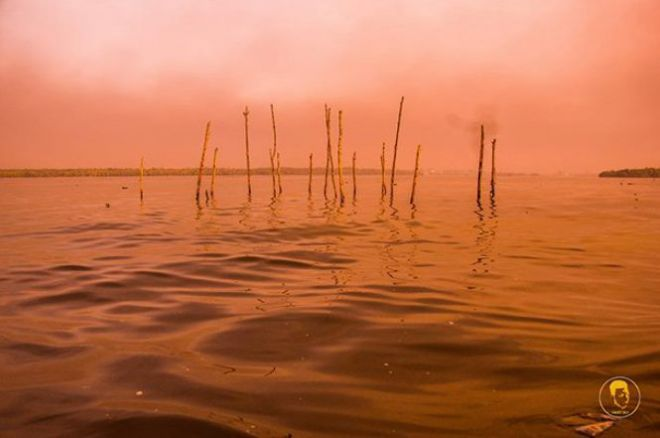 Палки в воде