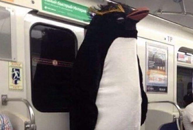 Огромный пингвин
