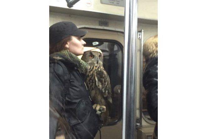 Женщина с совой
