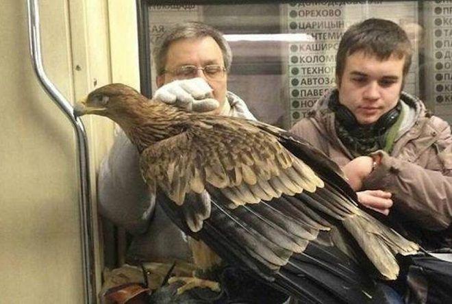 Пассажир с хищной птицей