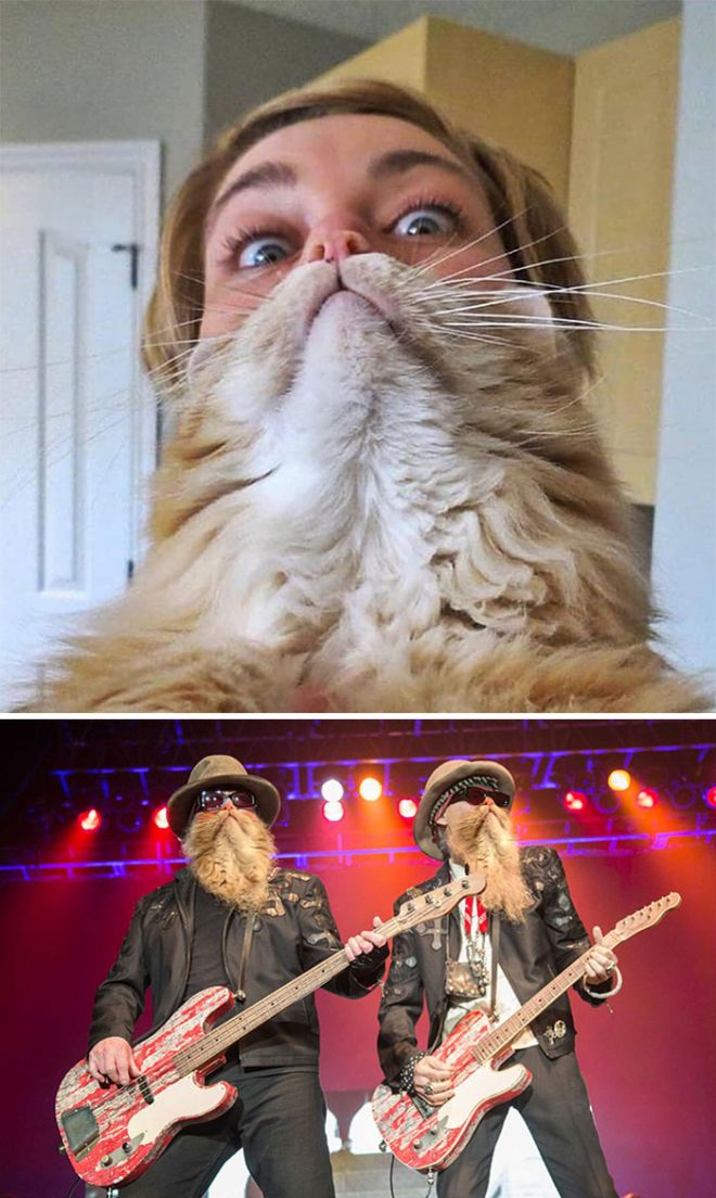 Борода из кошки