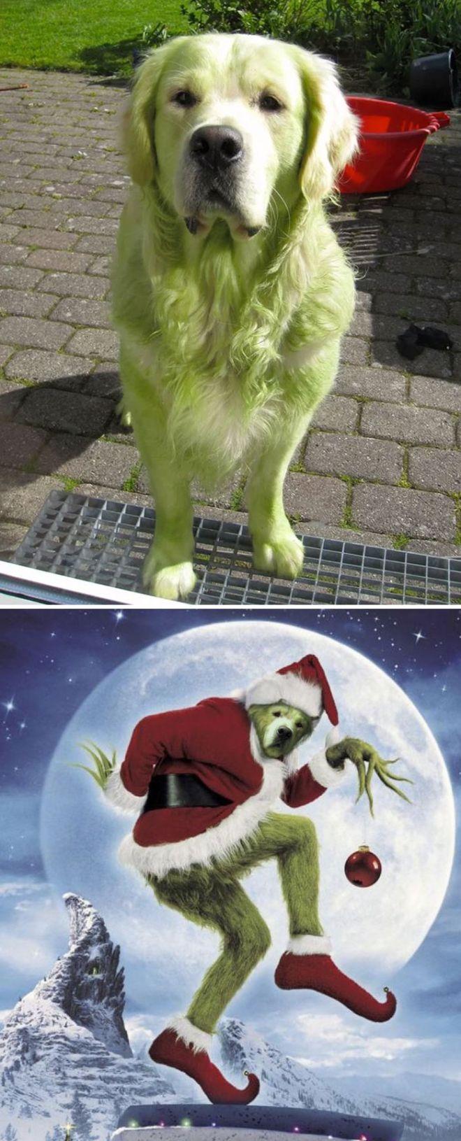 Зеленая собака