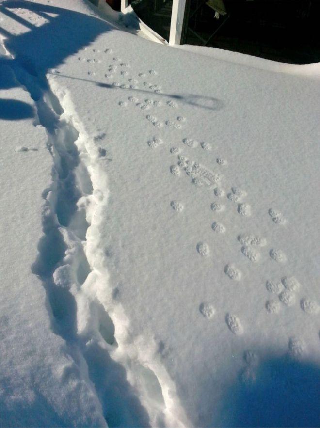 превосходно картинки смешные следы на снегу матиз автомобиль