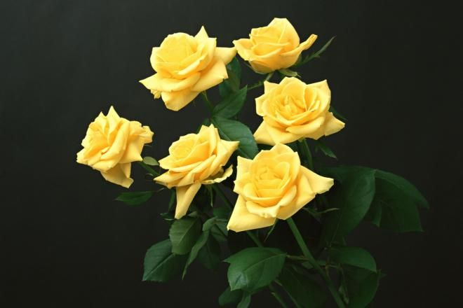 Розы любого цвета