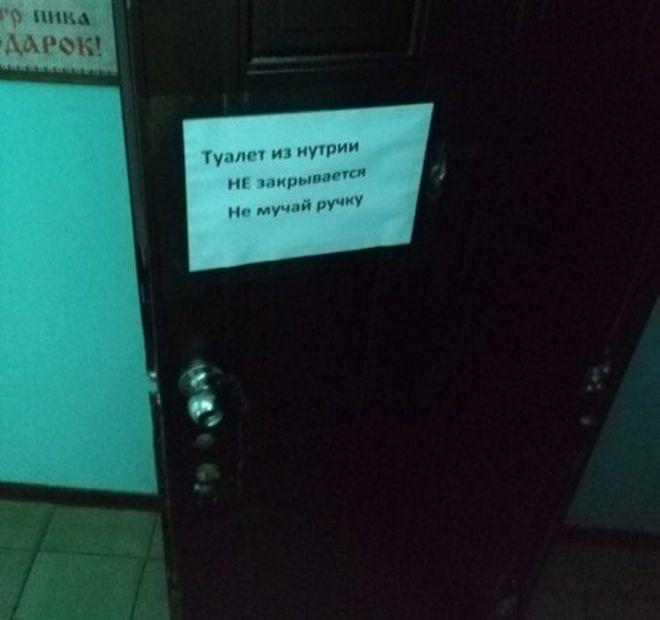 туалет из нутрии