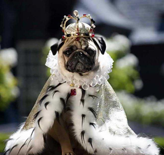 зовите меня просто царь