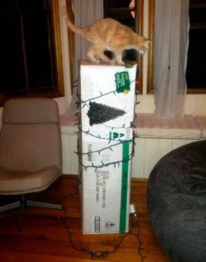 Кот на коробке с елкой