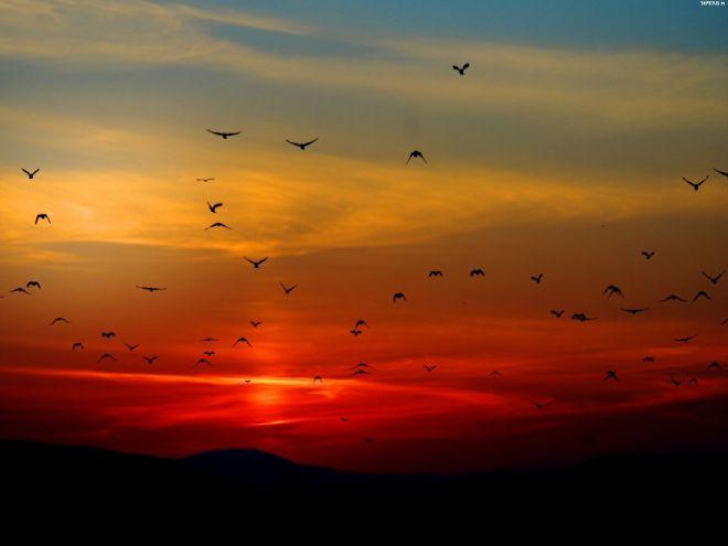 Мигрирующие птицы