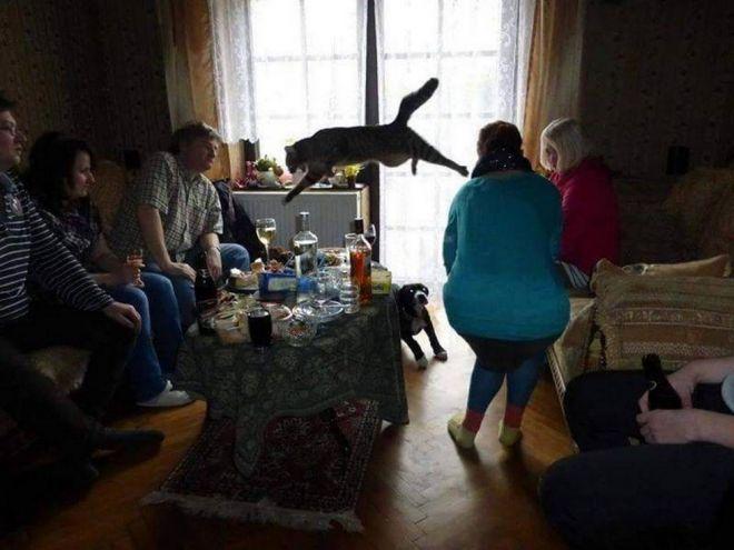 прижок кошки
