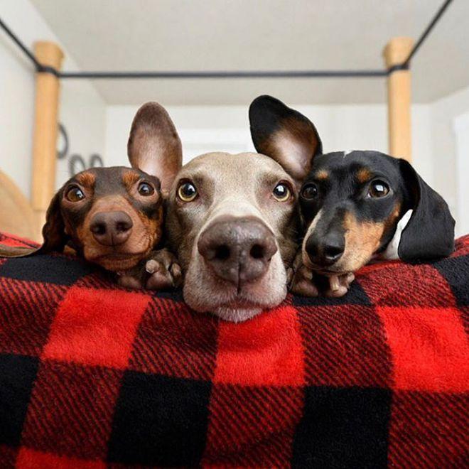 них три собаки фото косметологии