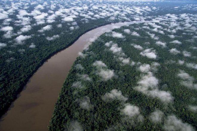 Дождевые леса Амазонии, Венесуэлла