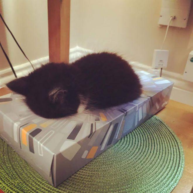У каждого кота должна быть своя коробка для сна