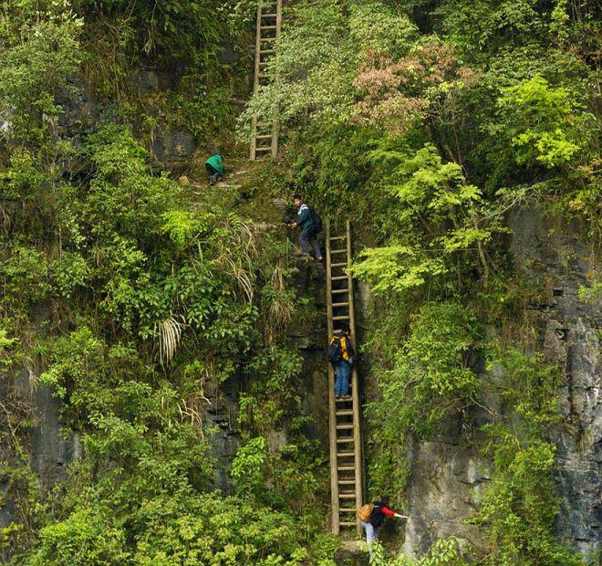 Деревянные лестницы к знаниям