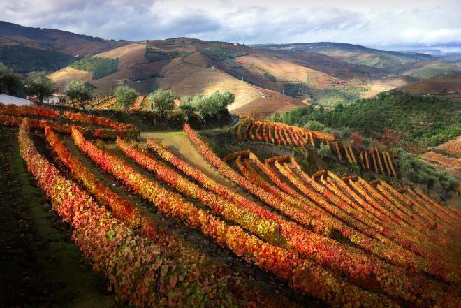 Виноградники долины Дуоро, Португалия
