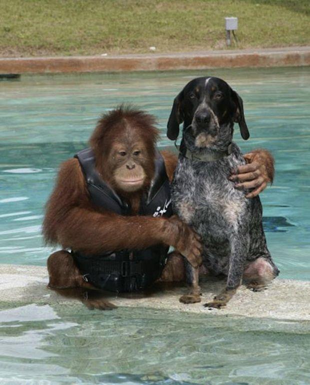 Праздником, прикольные картинки про собак и их хозяев