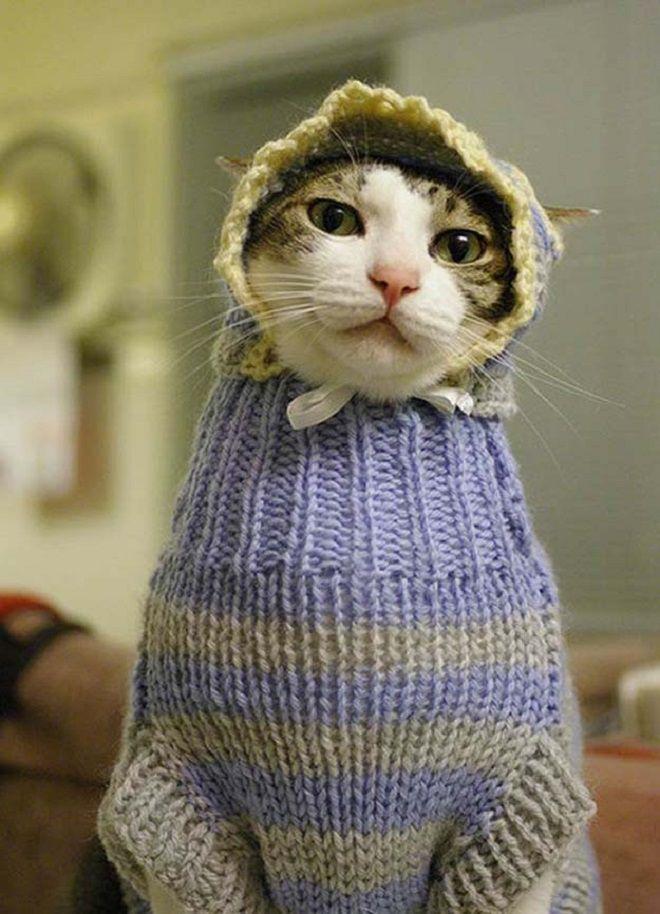 Про, смешная картинка кота перепутали с капюшоном была часто в вк