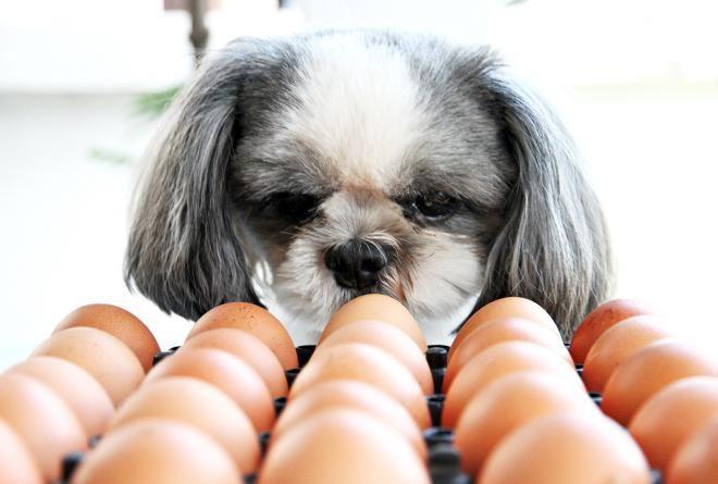 Не обманывайтесь на счет яиц