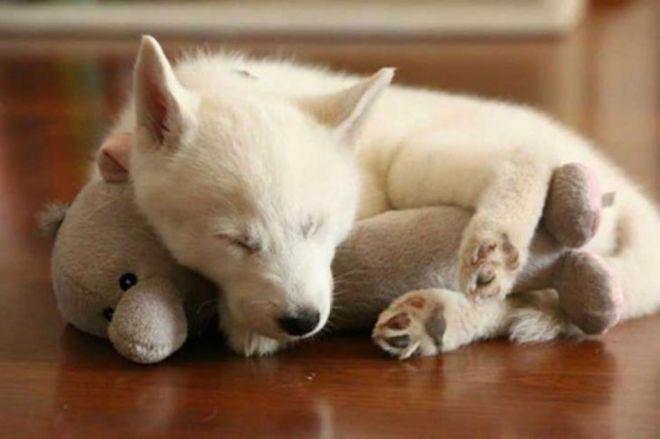 спится сладко-сладко