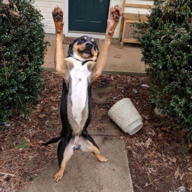 встречает твой пёс