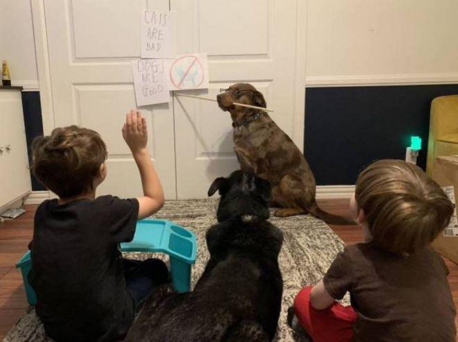 собаки на всё согласны