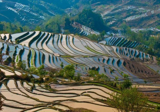 Террасовые поля Хунхэ-Хани, Китай