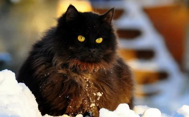Самый богатый кот в мире