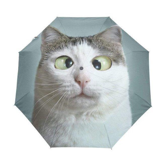 Зонт с котом